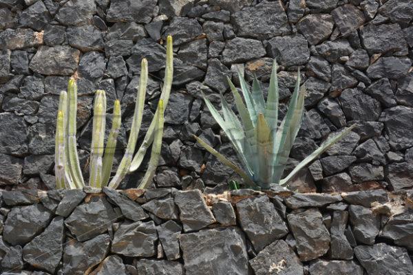 Pflanzen 013 – Mauerbepflanzung - Whomp.de