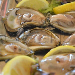 Food 022 – Austern - Whomp.de