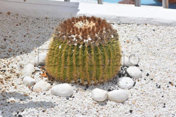 Pflanzen 006 – Kaktus - Whomp.de