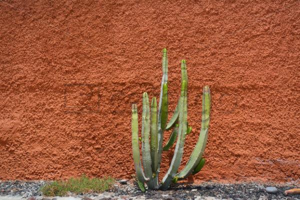 Pflanzen 012 – Mauerbepflanzung - Whomp.de