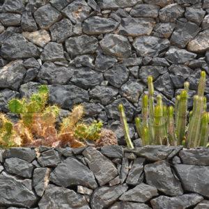 Pflanzen 014 – Mauerbepflanzung - Whomp.de