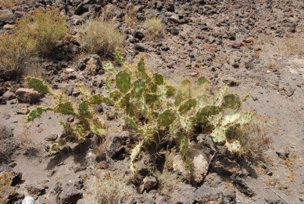 Pflanzen Bilder 003 – Kaktus - Whomp.de