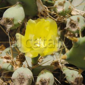 Pflanzen Bilder 004 – Kaktus - Whomp.de