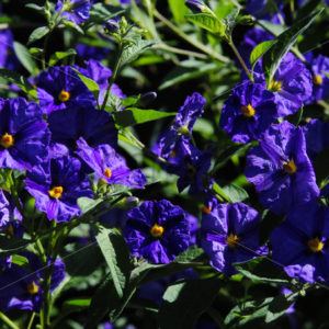 Pflanzen Bilder 005 – Blüten - Whomp.de