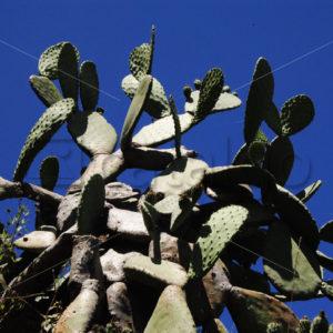 Pflanzen Bilder 006 – Kaktus - Whomp.de